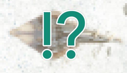 鹿児島でショア真鯛。色々考えて試した結果、釣れた魚はエイリアン??